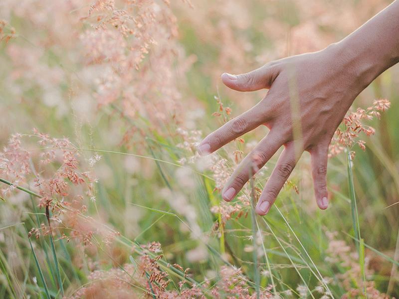 Los-cinco-sentidos-PORTADA
